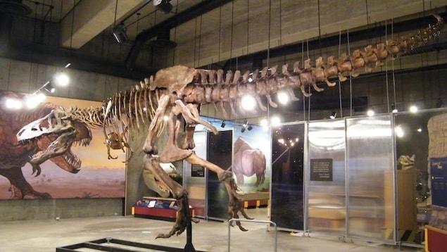 Une reproduction du squelette au Musée royal de la Saskatchewan
