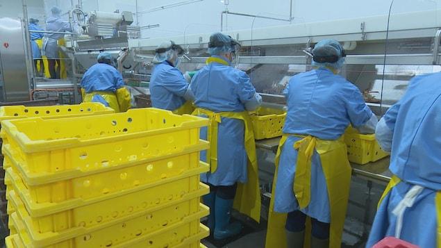 Des employés travaillent à l'usine vêtus de sarraus, de tabliers, de gants, de masques et de visières.