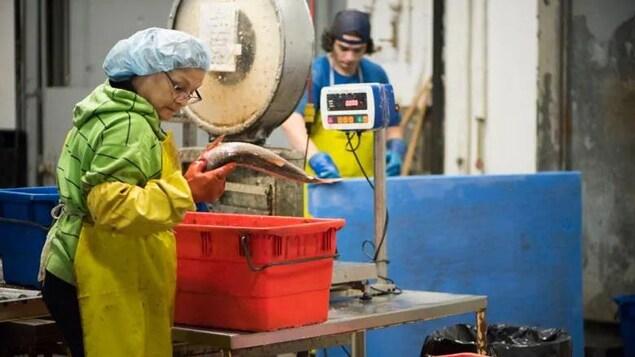 Une femme tient un poisson en main dans une usine dans laquelle se trouve une grande balance.