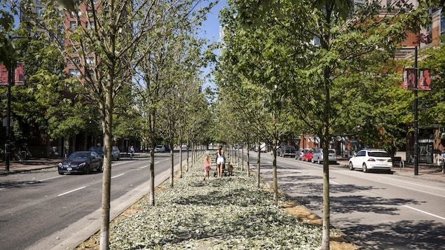 Trees along Pacific St. are pictured losing their leaves in the hot weather in Vancouver, British Columbia on Monday, July 5, 2021.