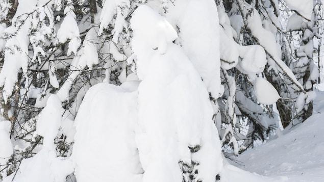 Un arbre enseveli sous la neige forme une sculpture.