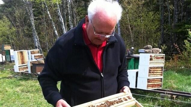 L'apiculteur Paul Vautour regardent des abeilles mortes dans une ruche