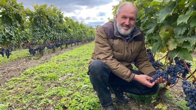 Un vigneron tient une grappe de raisins
