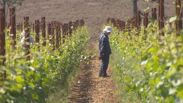 Le vignoble Domaine Roy et fils qui appartient à des Québécois pourrait faire les frais d'une bataille commerciale entre le Canada et l'Oregon.