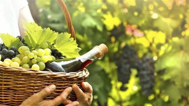 Un panier avec des raisins, une bouteille de vin et des vignes.