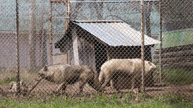 Des bêtes du zoo de St-Édouard
