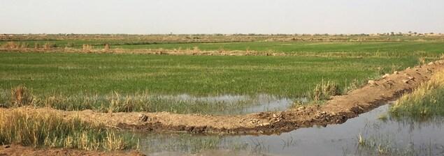 Un champ de plantes qui sortent d'un petit étang d'eau est photographié lors d'une journée ensoleillée.