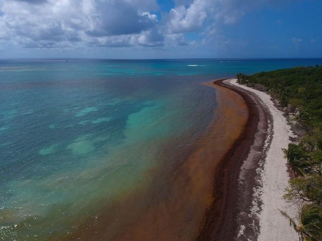 Vue aérienne d'une plage où les vagues rejettent des algues.