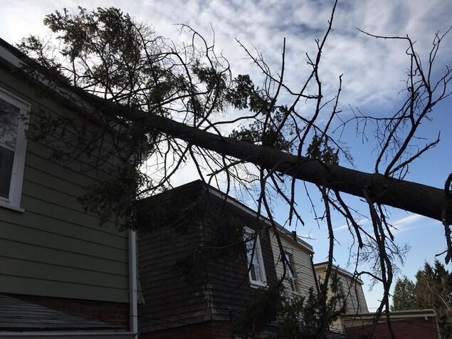 Un arbre tombé sur le toit d'une maison près de Donland et Danforth dans l'est de Toronto.