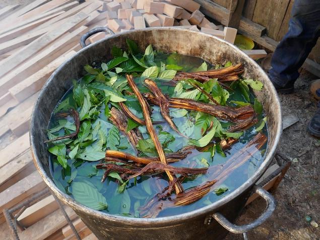 Grande marmite avec des feuilles et des racines