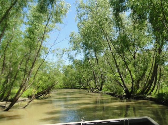 Le bayou et de la végétation, vus du bateau.