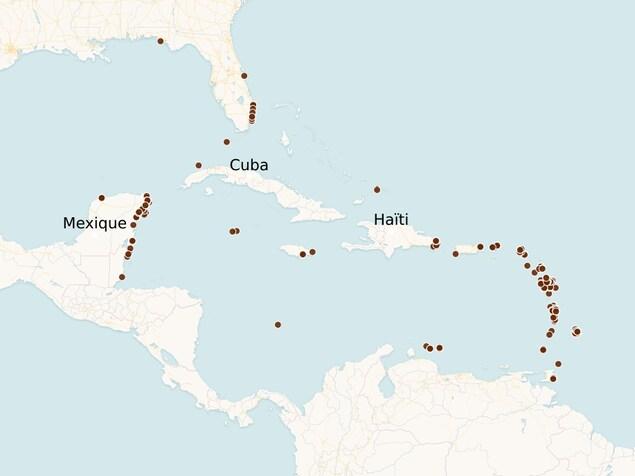 Une carte indiquant les plages où des sargasses ont été rapportées.