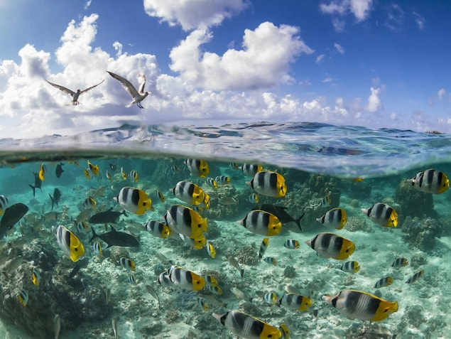Des poissons dans un récif de corail du Pacifique.