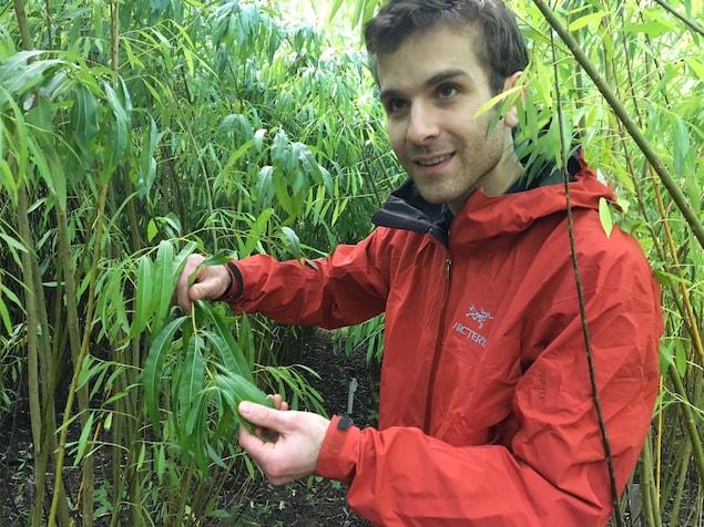 Xavier Lachapelle-Trouillard montre les feuilles d'un saule irrigué avec des eaux usées.