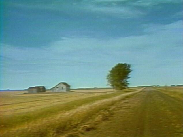 Un grand ciel bleu et une petite route de campagne qui passe à côté d'un arbre et d'une petite maison.