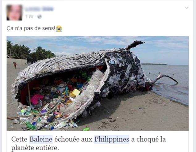 Capture d'écran d'un utilisateur Facebook qui croit qu'une statue de Greenpeace est une vraie baleine morte. «Ça n'a pas de sens!», peut-on lire.