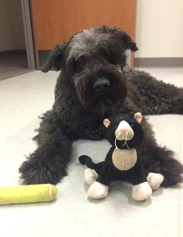 La chienne Stella et ses jouets.