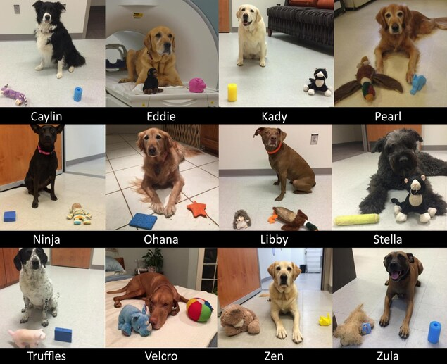 Les chiens qui ont participé à l'étude.