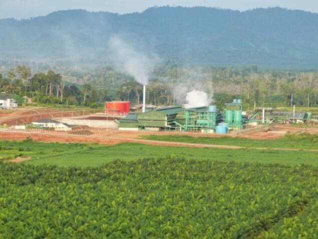 Image montrant des palmiers au premier plan, une usine de production d'huile de palme au centre et un parc national boisé en arrière-plan.