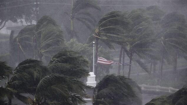 Les palmiers touchés par l'ouragan Irma, en 2017.
