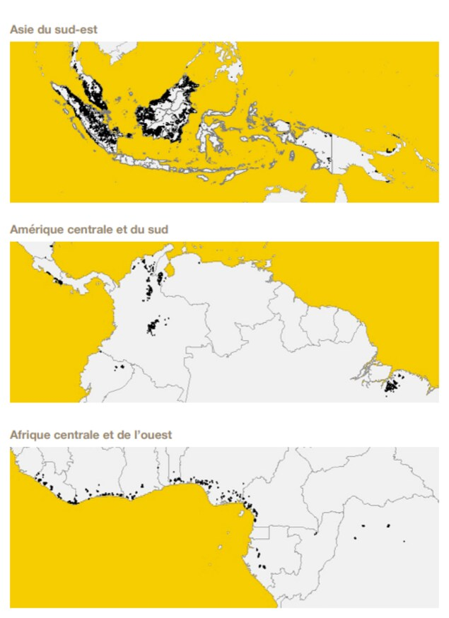 Carte des plantations de palmiers à huile dans le monde, selon l'analyse par satellite réalisée et revue dans la présente étude.