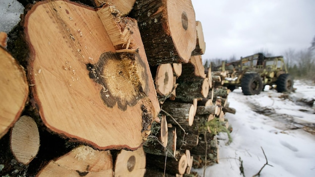 Du bois coupé et empilé.