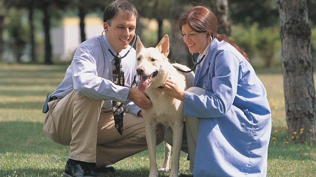 Des vétérinaires sont aux côtés d'un chien.