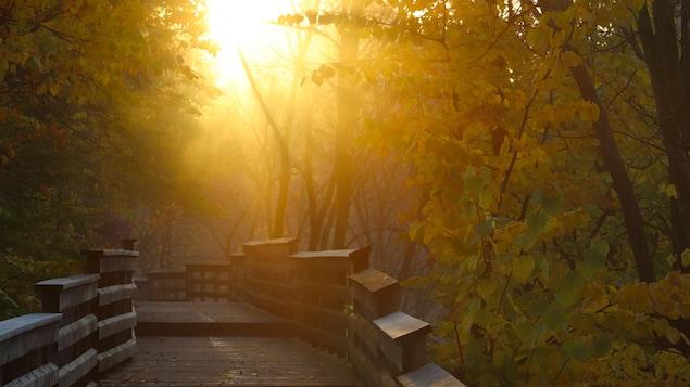 Percée de soleil dans un parc un matin d'automne.