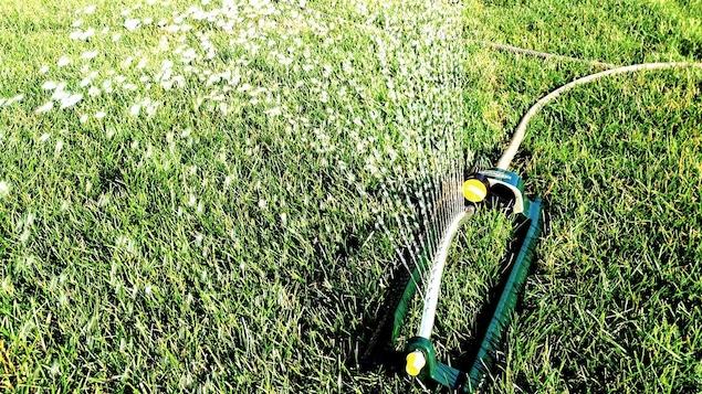 L'arrosage des pelouses consomme beaucoup d'eau potable.