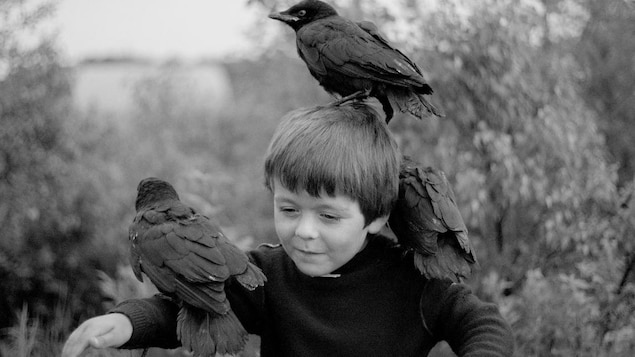 Un jeune garçon qui a un corneille sur chaque épaule et une sur la tête