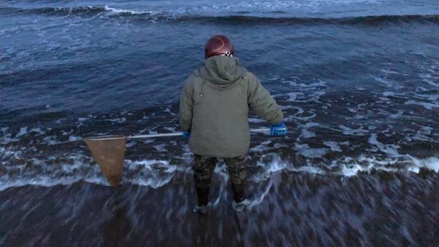 Un pêcheur de capelan à l'œuvre, les pieds dans l'eau avec son filet.