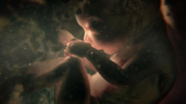 Un fœtus se recroqueville dans le ventre de la mère.