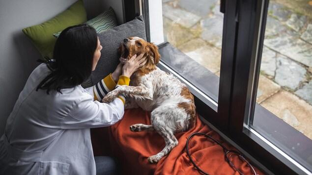Une vétérinaire examine un chien dans le salon d'une maison.