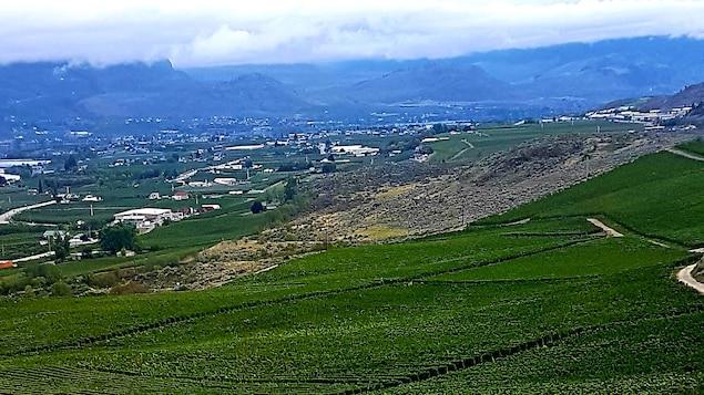 Le domaine vinicole d'Osoyoos-Larose dans l'Okanagan