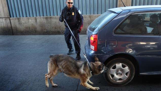 Un agent en uniforme tient en laisse un chien qui renifle une voiture.