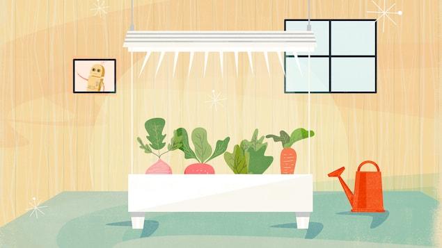 L'illustration montre une serre à l'intérieur d'une pièce. Dans la serre poussent un radis, une laitue et une carotte. Un arrosoir repose à côté de la serre.