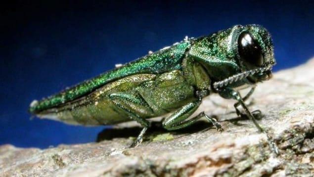 Gros plan d'un insecte sur un arbre.
