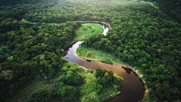 Une forêt traversée par une rivière.
