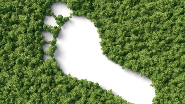 Une illustration montre l'immense trace laissée par un pied humain dans un forêt.