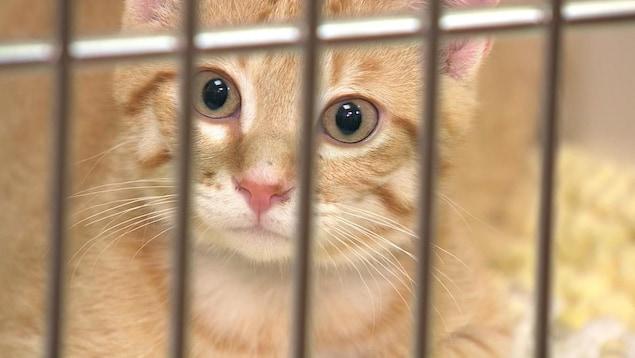 Un petit chaton dans une cage.