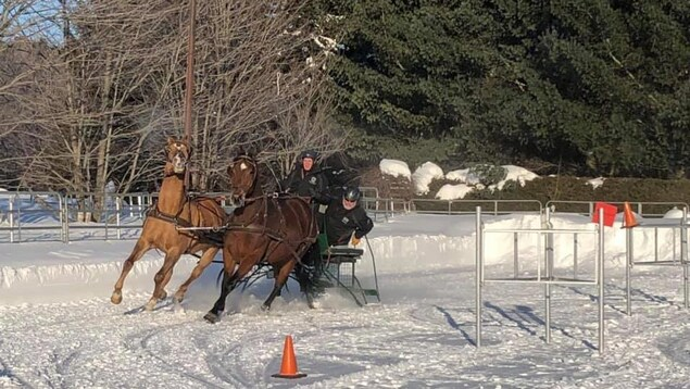 Une course de de chevaux sur neige avec attelage