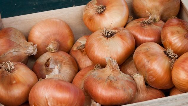 Une cagette d'oignons au marché