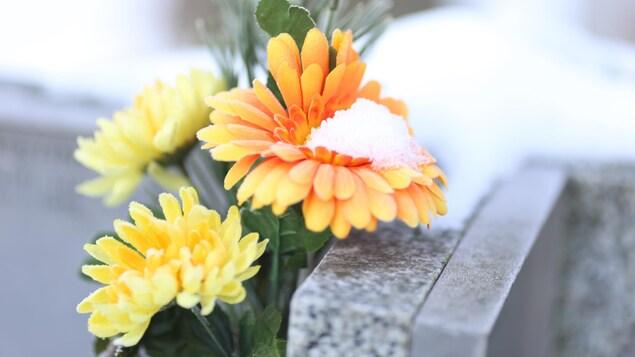 Fleurs jaunes sur une pierre tombale enneigée.
