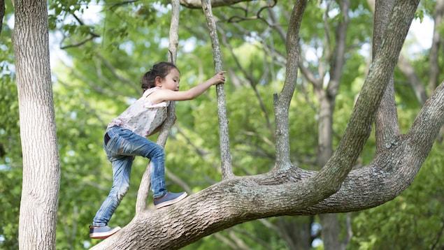 Une fillette grimpe dans un arbre.