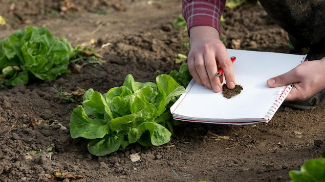 Une personne prend des notes pendant qu'elle jardine.