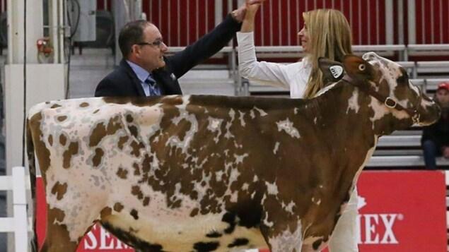 Une femme et un homme se tapent dans la main derrière une vache.