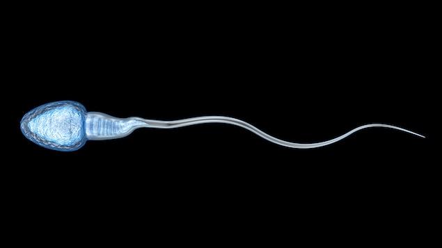 Le spermatozoïde est placé sur fond noir.