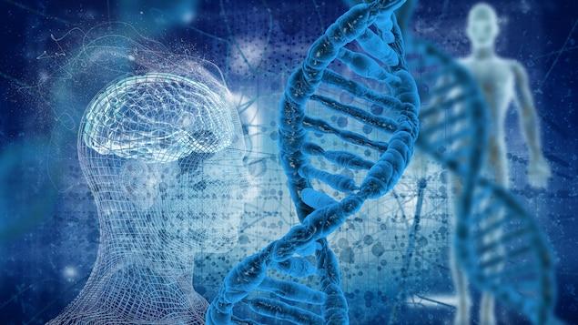 Vue informatisée d'un corps humain et d'une tête humaine sur lesquels est superposée la modélisation de deux séquences d'ADN.