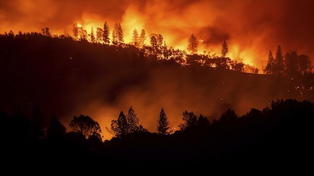 Une forêt californienne aux prises avec un incendie