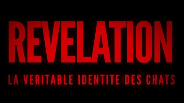 Titre du documentaire Révélation, la véritable identité des chats inscrit sur l'écran.